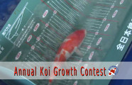 Annual Koi Growth Contest