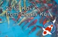 2019 Koi from Ogata Koi