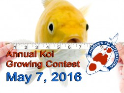 Annual Koi Growing Contest and BBQ May 7, 2016