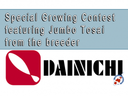Special Growing Contest featuring Jumbo Tosai from the breeder Dainichi