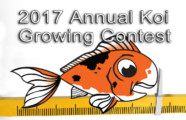 2017 Annual Koi Growing Contest