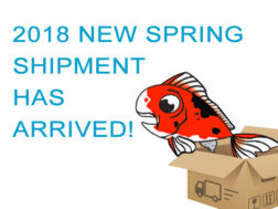 2018 koi – new spring shipment has arrived