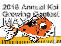 annual-koi-growing-contest-2018